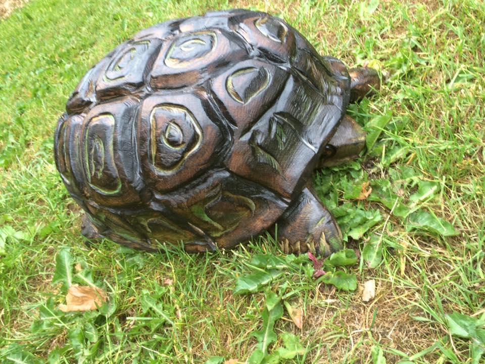 skildpadde-i-eg-2